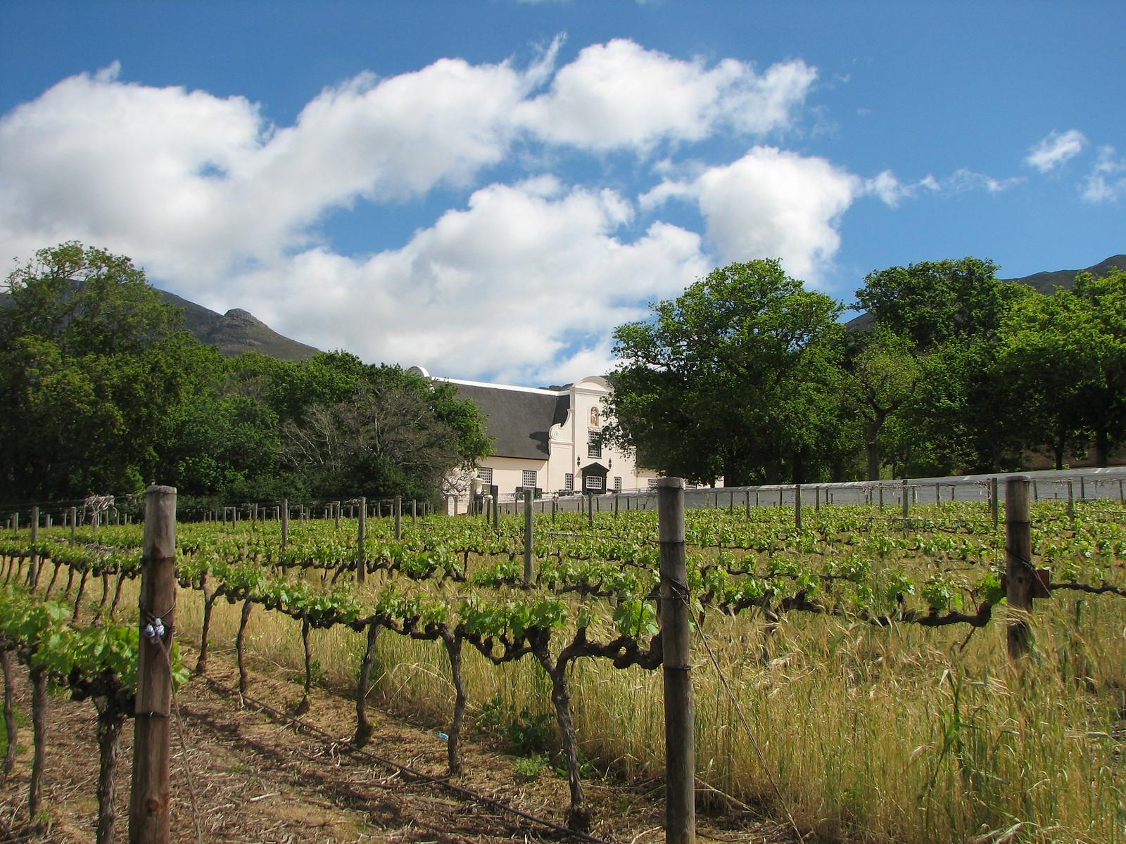 Wine Lands 024