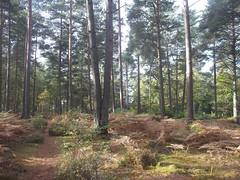 treesnewtowncommon3