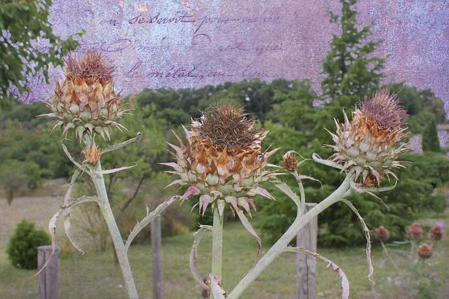 20140728_0349-artichokes-sky-recoloured-2