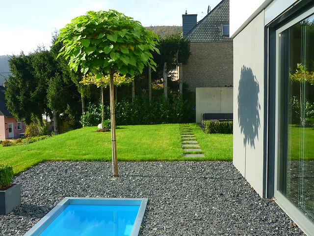 Kugel-Trompetenbaum