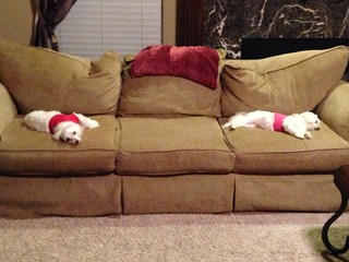 Couch potatoes