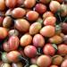 Small photo of Areca nut