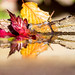 Autumn's Fragile Beauty - IMG_2761 by s0ulsurfing