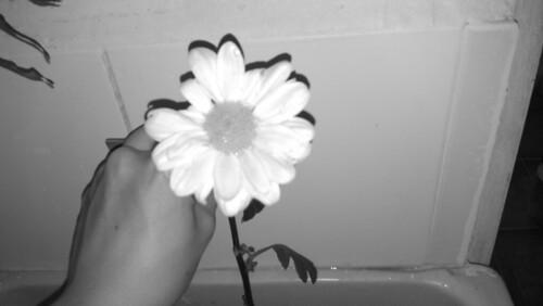 20141001-bwflower