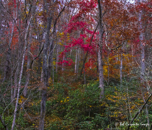 travel trees woods unitedstates fallcolors northcarolina blueridgemountains canton