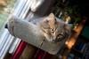 2014-10-8 Golden hour cat
