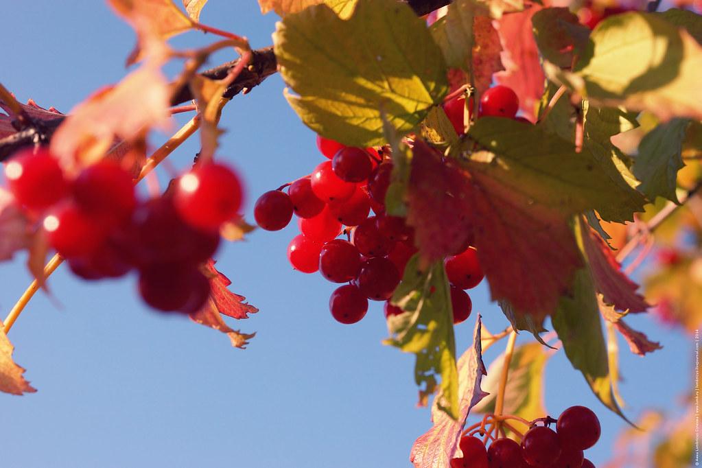 2014.09.21 Осенняя дача