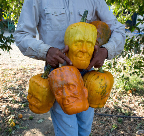 pumpkinstein_Halloween-special_pumpkins_6