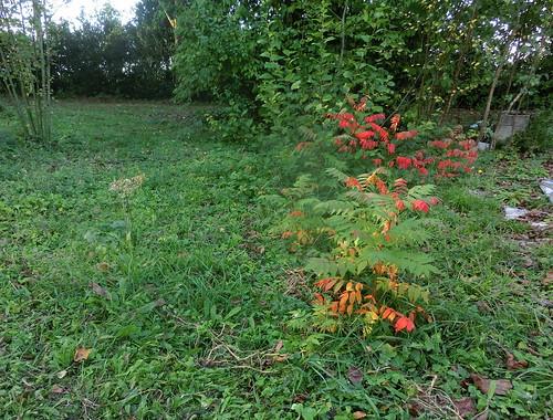 2014-10-19 16.16.58 acacia