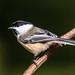 Bird Outing 1