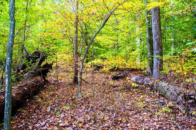 Wells Woods Nature Preserve