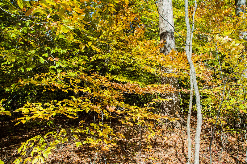 Guthrie Memorial Woods Nature Preserve