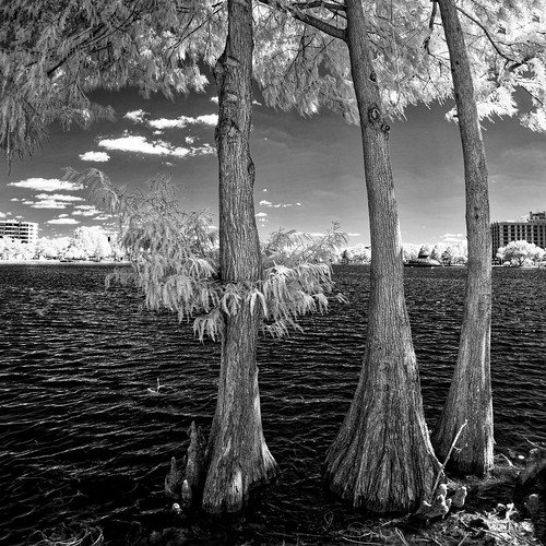 blackandwhite bw panorama usa lake plant building tree water landscape ir orlando cityscape florida infrared cypress centralflorida edrosack