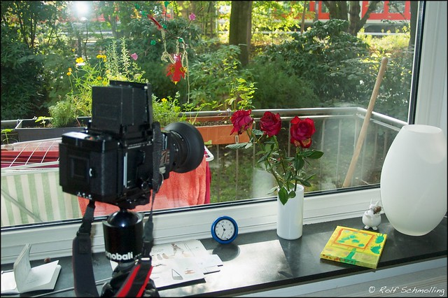 Shooting still life: roses with the BEAST (Mamiya RB 67 Pro S, Mamiya K/L 1:3.5 f=127mm L  )