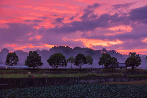 trees sunset japan clouds landscape countryside sony cabbage 日本 木 kagawa 雲 風景 夕焼け キャベツ 田舎 香川 manno apsc a6000 まんのう ©jakejung sel1670z e1670mmf4zaoss α6000 ilce6000