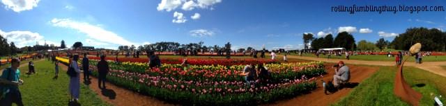 Tesselaar Tulip Festival, Melbourne