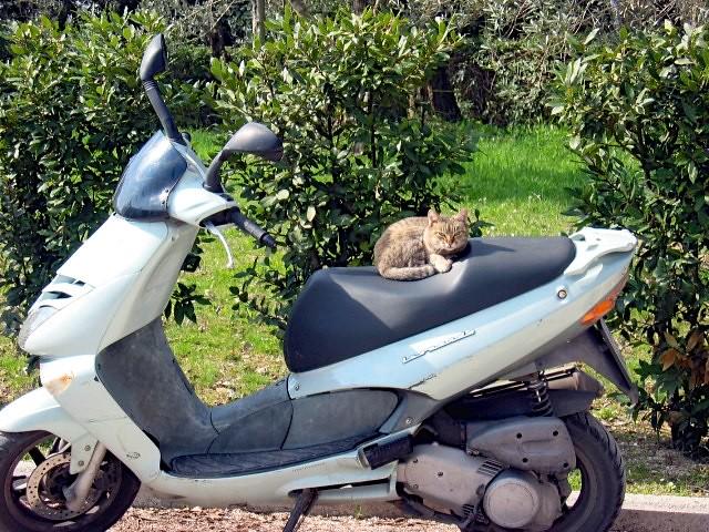 kitten-motorino-italy-cr-brian-dore
