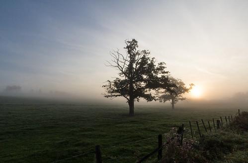morning trees tree nature fog sunrise treesilhouette morninglight nebel natur bäume morgen baum sauerland morgennebel morgenlicht morgenstimmung autumnmorning hochsauerland earlyfog baumsilhouette