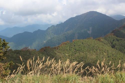 銅山一帶的台灣水青岡,都站到稜線上。