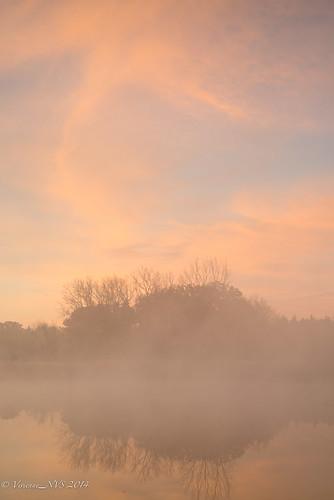 mist fog sunrise illinois pond frost preserves lakecounty foggyscenes halfdayforestpreserve halfdaypond