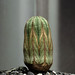 cactus still