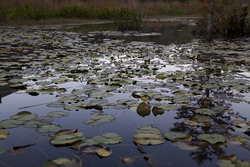 sunset reflection canon nc pond durham dusk northcarolina lilypad 6d nymphaeaceae 24105mm
