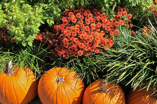 Dallas Arboretum-Oct. 2014-19