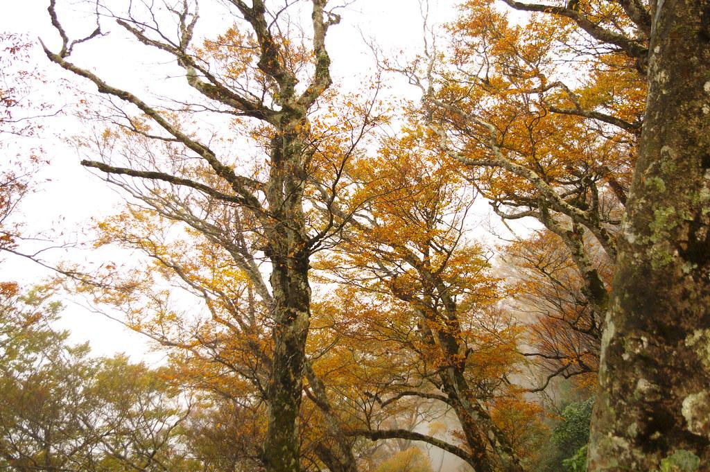 出門尋找秋天的氣息...