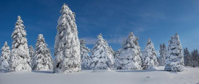 Historic Lake Effect Snow in Buffalo New York Area