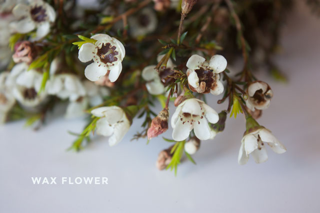 wax-flower-1