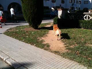 Desire path Caminet de desig Girona (1)