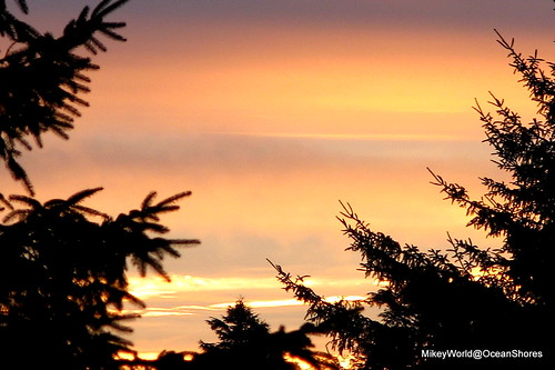 trees red sun silhouette sunrise early planes rise levels oceanshores beachin stratum frontwindow mikeyworld planesoflight