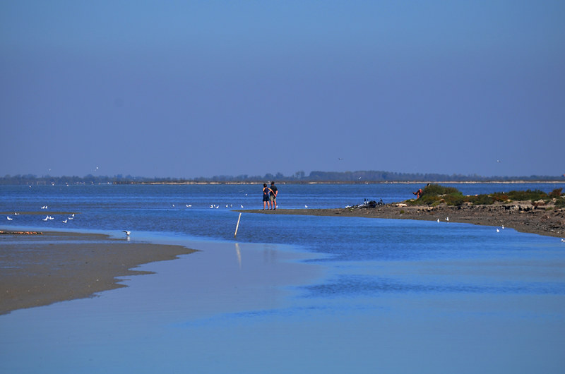 Flat and Wet, Camargue, France