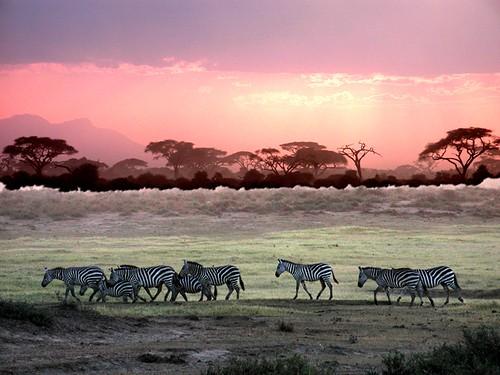 photos kenya safari afrique