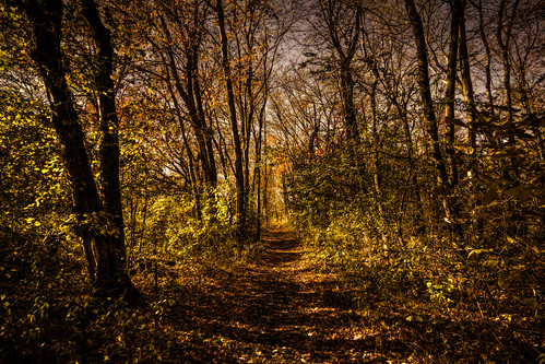 travel autumn light sunlight color fall tourism nature weather landscape photography landscapes cool woods photographer shadows path newengland sunny providence crisp rhodeisland chilly pvd cranston goprovidence autumn2014