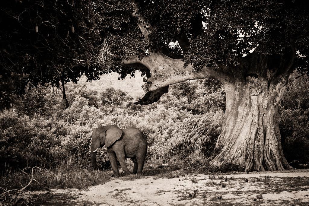 elephant and the tree 1
