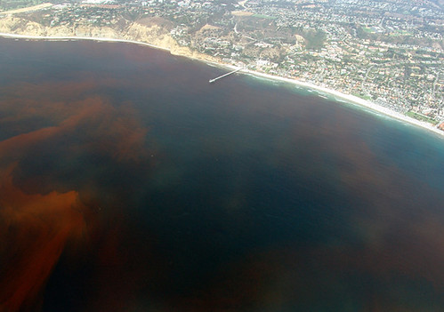 美國加州海域的死區。(來源:維基百科)