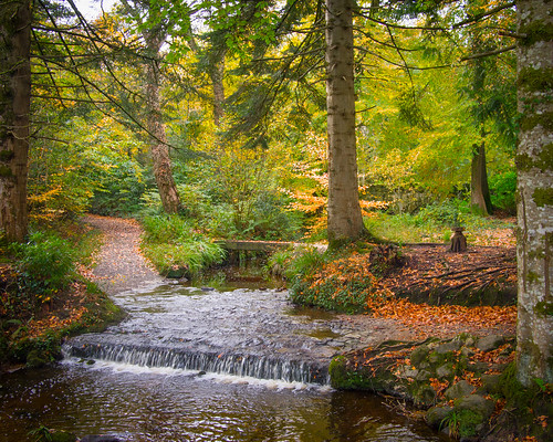 autumn trees leaves stream northernireland nationaltrust ulster fermanagh florencecourt