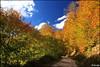 Los colores del otoño II
