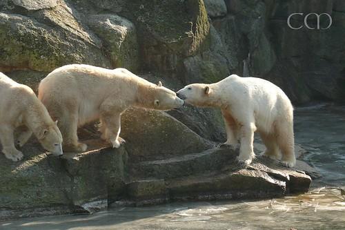 Nancy & Knut