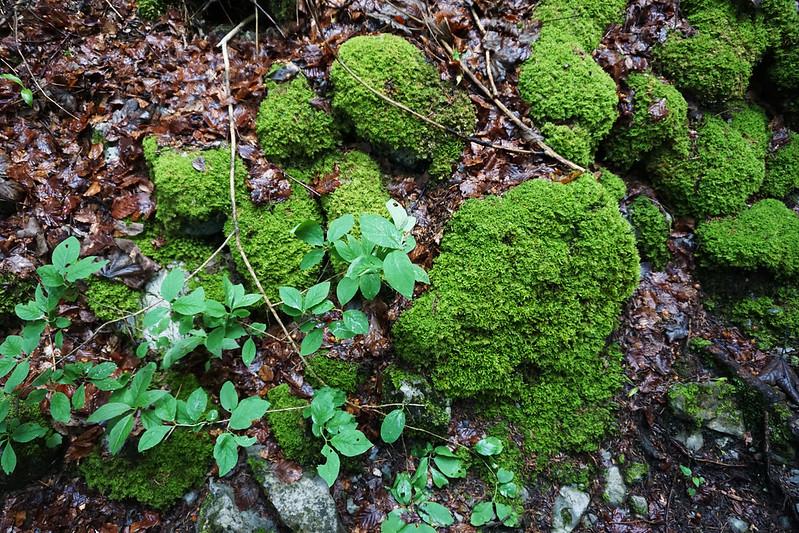 mossy ground
