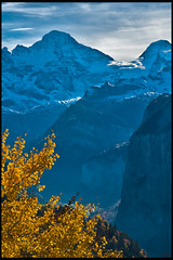 Swiss Autumn time ; the summits of the Breithorn (3,782 m.) the Tschingelhorn (3,557 m. )  and Murren View from Wengen. No. 1346.