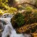 Río Cerezuelo en otoño