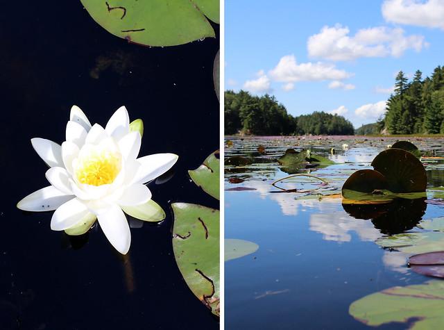 Killarney Water Lily Lake
