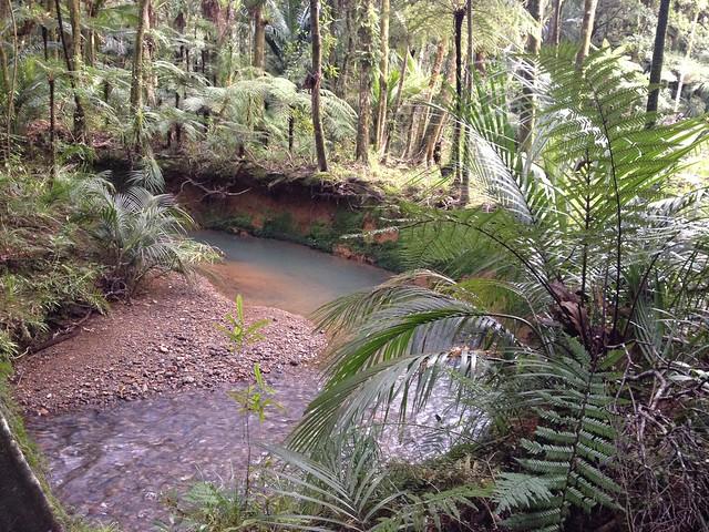 stream in Pukenui Forest