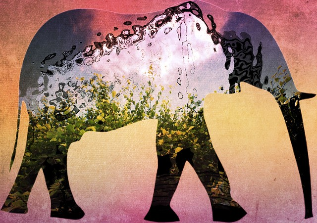 Elephant Presence