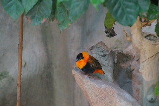 126 Oranje wever
