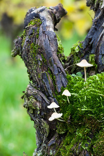 Moss and mushrooms on old vines