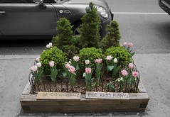 shrub, flowerpot, flower, plant, flora, floristry,