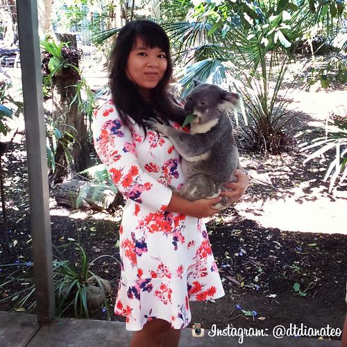 Lone Pine Koala Sanctuary Australia